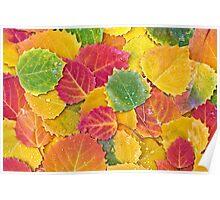 Birch Leaf Kaleidoscope Poster