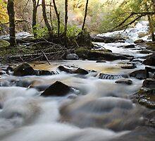 Down Stream Alsea Falls by Annie Underwood