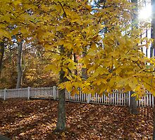 White Picket Fence in Autumn by tonyaleigh
