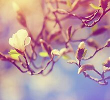 Magnolia Spring Bloom by JennyRainbow