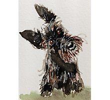 Happy Scottie Dog Photographic Print