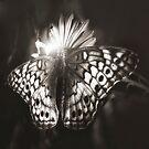 Butterfly Effect by Bob Larson
