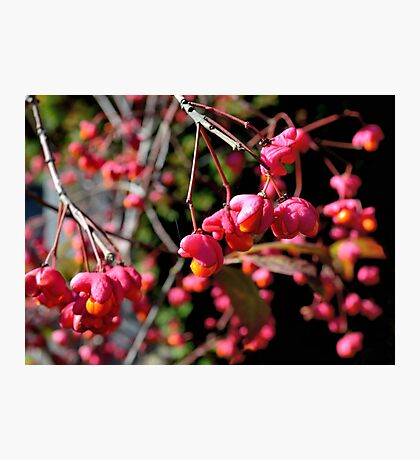 Pink and Orange October Fruits Photographic Print