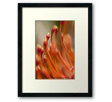 So Precious......... Framed Print