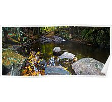Wading Pool in the Woods Poster