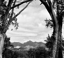 Framing the Flinders Ranges NP - South Australia by Norman Repacholi