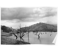 Skeletons in the water - Lake Hume Poster