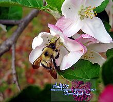 bumble bee in bliss by LoreLeft27