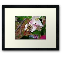 bumble bee in bliss Framed Print