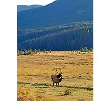 RMNP Plains in Autumn  Photographic Print