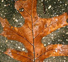oak leaf by arteology