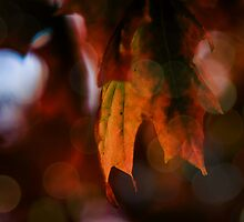 Autumn Leaves by Annie Lemay  Photography