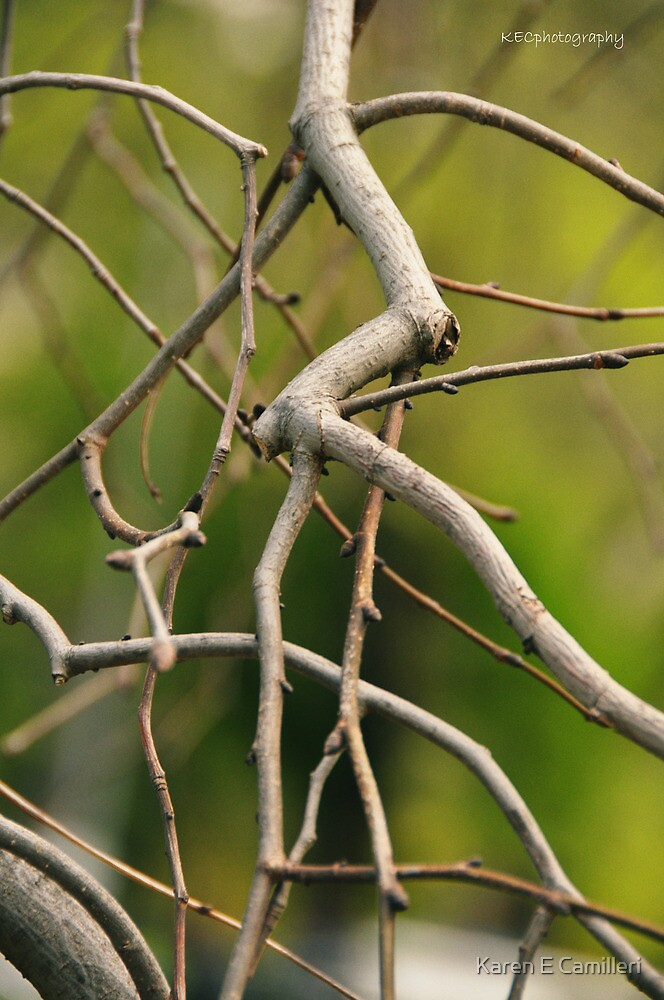 Branch Out by Karen E Camilleri