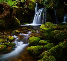 One of the Bastion Cascades, Meander Forest Reserve, northern Tasmania by Nic Haygarth