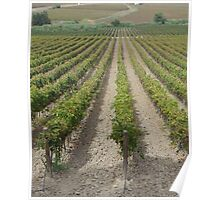 Vineyard Perspective - Sicily Poster