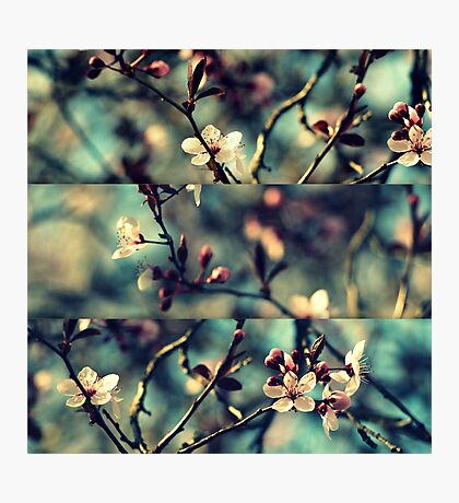 Vintage Blossoms - Triptych Photographic Print