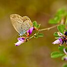 Autumn's flower and little butterfly  by davvi