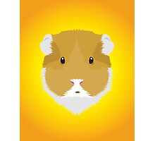 Brown Guinea Pigs Photographic Print