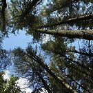 Sky View by Lynn Gedeon