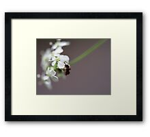 The softly approach... Framed Print