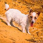 Jack at the beach Southwold by Kawka