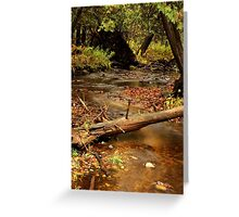Skunk Creek Greeting Card