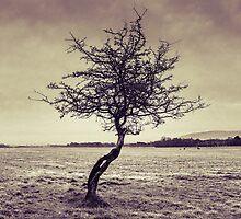 Alone by DanButlerPhoto