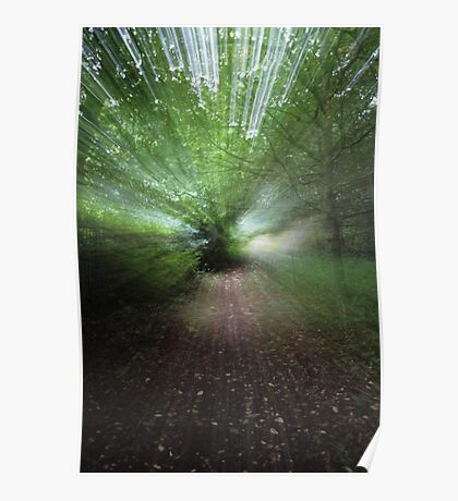 Woodland Abstract #3 Poster