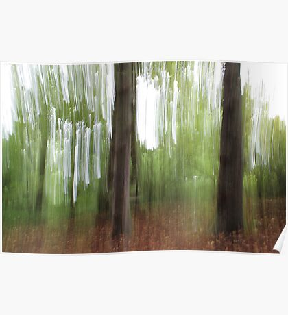 Woodland Abstract #5 Poster