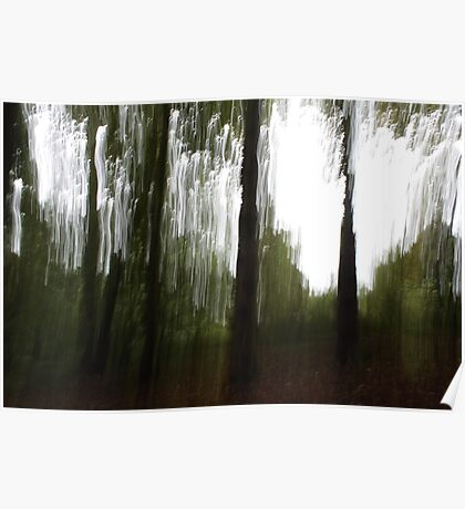 Woodland Abstract #6 Poster