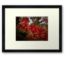 Just A Bunch Of Reds ~ Leaves Fall Colors ~ Framed Print
