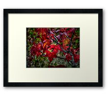 Just Slide Along ~ leaves Fall Colors ~ Framed Print