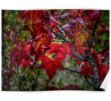 Just Slide Along ~ leaves Fall Colors ~ Poster