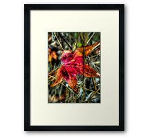 One Red Dude ~ Leaves Fall Colors ~ Framed Print