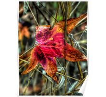 One Red Dude ~ Leaves Fall Colors ~ Poster