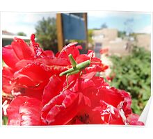 Flower and Insect Close-Up, Santa Fe, New Mexico Poster