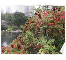 Central Park Autumn Colors, New York City Poster