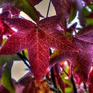Get It Right ~Leaves Fall Colors ~ by Charles & Patricia   Harkins ~ Picture Oregon
