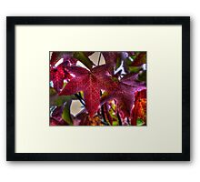 Get It Right ~Leaves Fall Colors ~ Framed Print