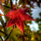 One Last Time ~ Leaves Fall Colors ~ by Charles & Patricia   Harkins ~ Picture Oregon