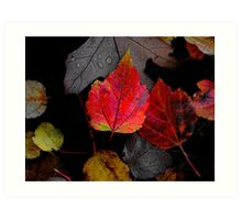 Just Little Old Me ~ Leaves Fall Colors ~ Art Print