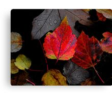 Just Little Old Me ~ Leaves Fall Colors ~ Canvas Print