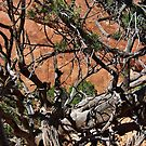 Desert Pine Branches by debidabble