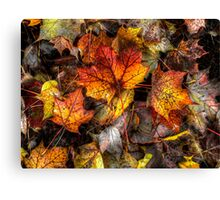A Grand Old Bunch ~ Leaves Fall Colors ~ Canvas Print