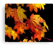 Another Good Day ~ Leaves Fall Colors ~ Canvas Print