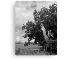 The Sad And Lonely Tree Canvas Print