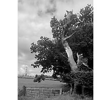 The Sad And Lonely Tree Photographic Print