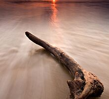Driftwood at sunset by Davidpstephens