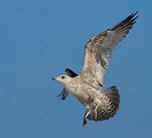 Seagull - I by Peter Wiggerman