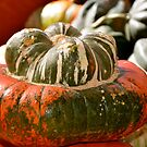 A Very Interesting Squash... by Carol Clifford